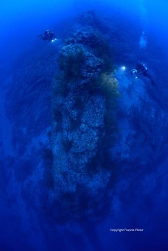 Orca06